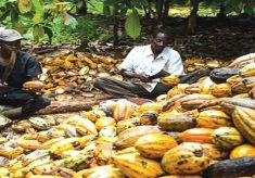 Arguments rage on over alleged fake FG cocoa inputs