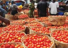 Christmas: Prices of tomatoes, pepper by 45% in Lagos