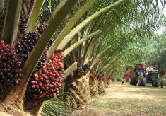 Fire destroys 10 hectares palm oil farm in Plateau