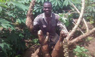 30kg-cassava-production-3