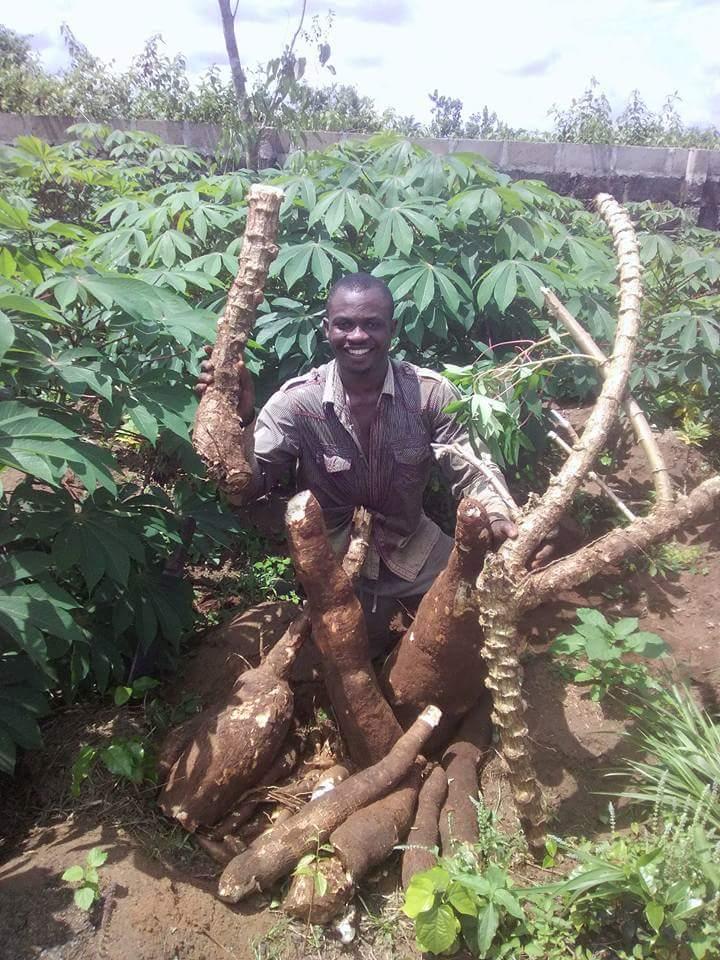 30kg-cassava-production-3
