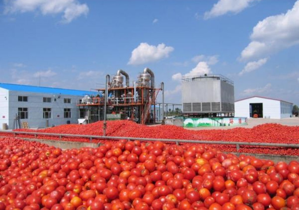 Benue Tomato Farmers Suffer Wastages