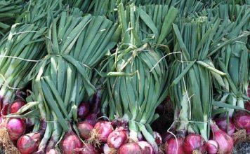 Farming-Onions