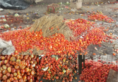 Tips On Post-Harvest Losses