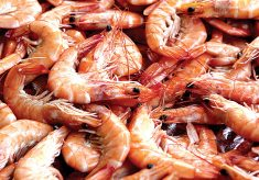 Shrimps: Nigeria loses $2.3b to poachers