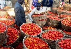 GAIN-PLAN advocates end to postharvest losses