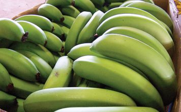 fruits bananas