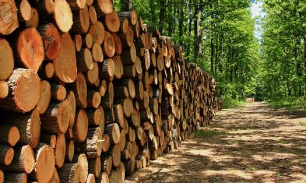 Ireland's new forestry programme – what's in it for farmers?
