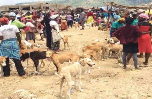 Story of Nigeria's largest dog market