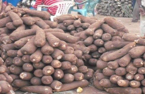 Rotten Yams Export: Minister, others face probe