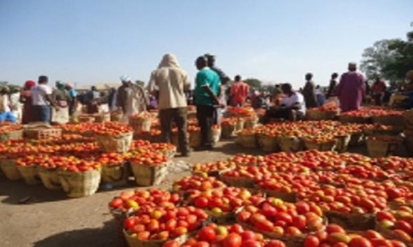 Nigeria losses N28.4bn worth of tomatoes annually