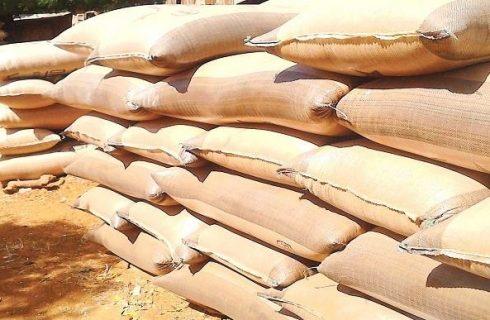 Millet scarcity hits Kano markets as price skyrockets