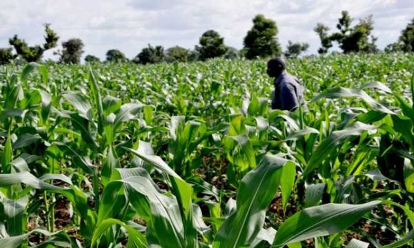 Subsidizing agriculture only way to food security – Taraba Chief