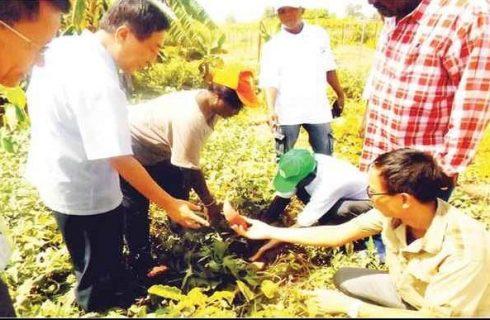 Orange-fleshed potato has lots of health, economic potentials – Farmer