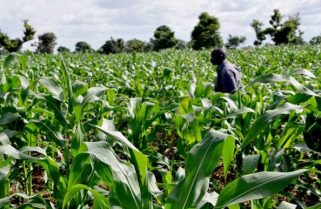 ECOWAS, Oxfam, others urge gender equity in Agric investment in Africa