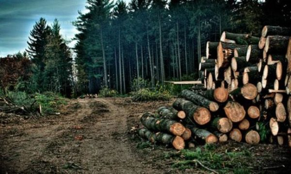 Climate Change: $200bn required globally for deforestation-free agriculture