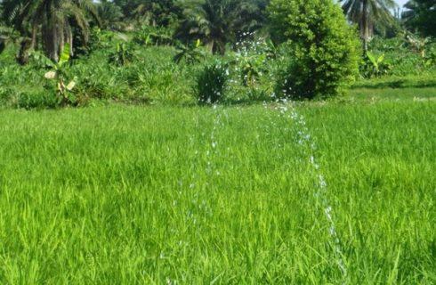 Group empowers Ogun women on dry season farming