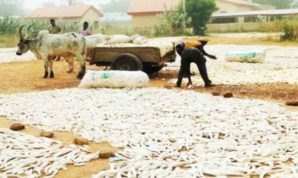 How food production, rural infrastructure upscale through ATASP-1 in north-west