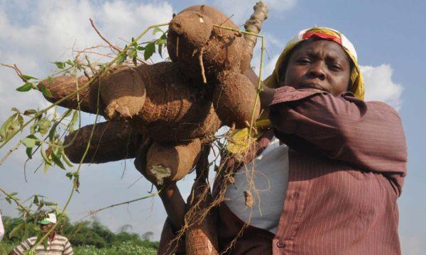 FMARD trains 75 women on cassava production