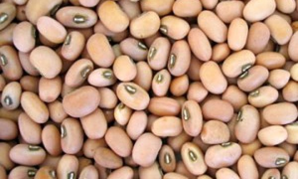Cowpea(Beans) Cultivation