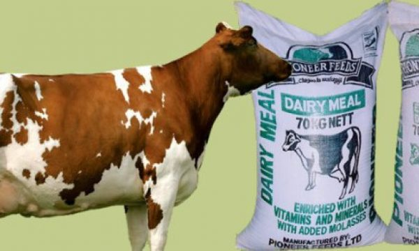 How to make your own dairy meal at home