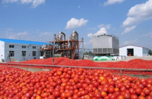 Tomatoes Flood Calabar Markets
