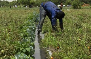 FG subsidises farmers' insurance by 50% – NAIC
