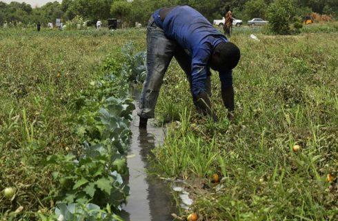 FG subsidises farmers' insurance by 50% – NAIC