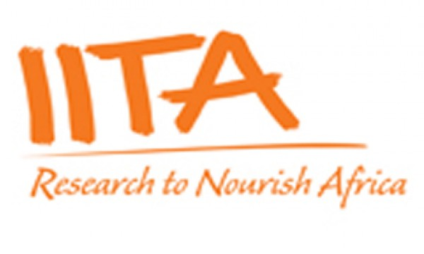 Communication Assistant at the International Institute of Tropical Agriculture (IITA)