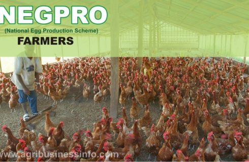 How To Apply As a NEGPRO Farmers