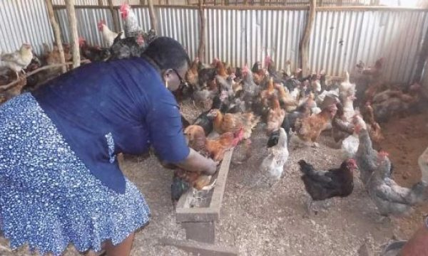 How a Poultry Farmer Embarked Back On A Fresh Start After A Tragedy