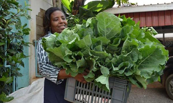 5 easy steps to profitable vegetable farming