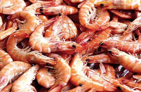 Shrimps: Nigeria loses $2.3b to poachers
