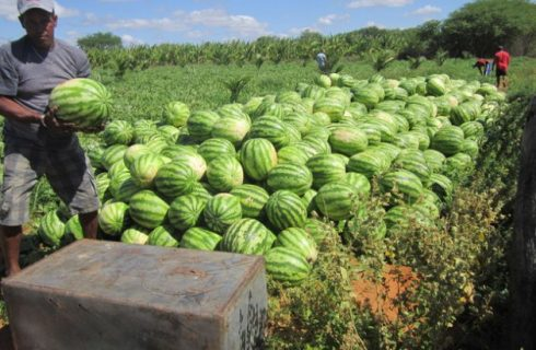 Easy guide to farming watermelons in Kenya