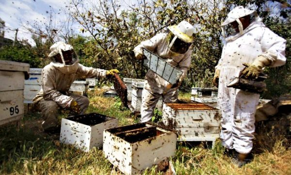 Unbelievable sum of money you can make from beekeeping business