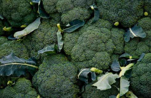 Planting, Growing, and Harvesting Broccoli