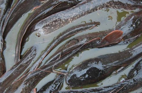 Fish farmers urge FG to review incentives to fish importers