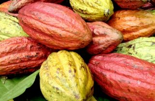 Cocoa Leads, As Nigeria Tin Can Port Records 150% Increase In Agro Exports in 2017