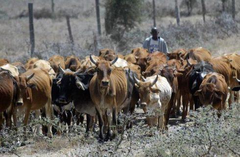 Ekiti Moves To Prohibit Open Grazing