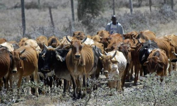We Want Grazing Reserves To Be Sited In The North – Gov. Tambuwal