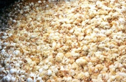 Use of Hatchery Waste in Poultry Feed