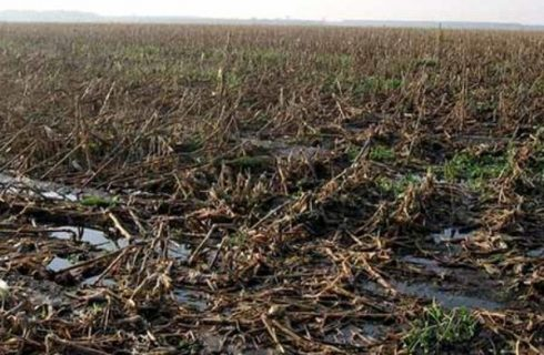 Effect from Hurricanes on Farmers Can Be Devastating