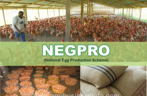 Understanding The National Egg Production (NEGPRO) Scheme & How To Participate