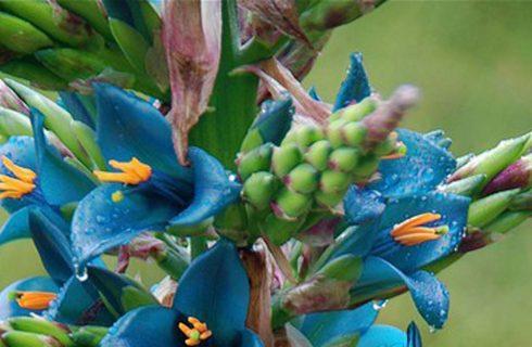 Bromeliads- Pineapple plants