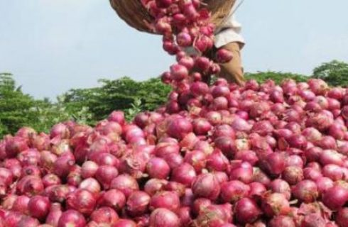 A to Z of growing quality onions profitably