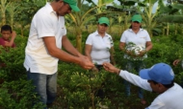 Lasting peace in Colombia requires building strong rural and agricultural institutions