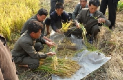 DPR Korea's food production hit by the worst drought since 2001