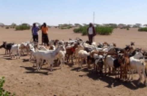 Useful Tips for Small Livestock Farms feed management