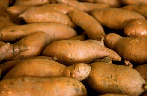 Best Ways to Farm Sweet Potato – Expert