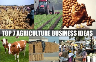 Key Elements For Successful Agribusiness Job Creation In Africa